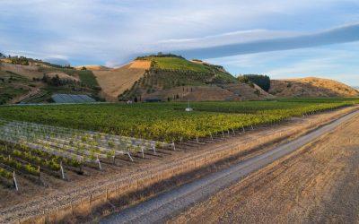 Hawke's Bay's Gimblett Gravels Wine Growing District