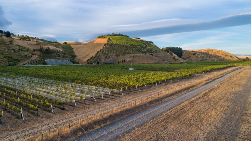 Hawke's Bay's Gimblett Gravels Wine Growing District